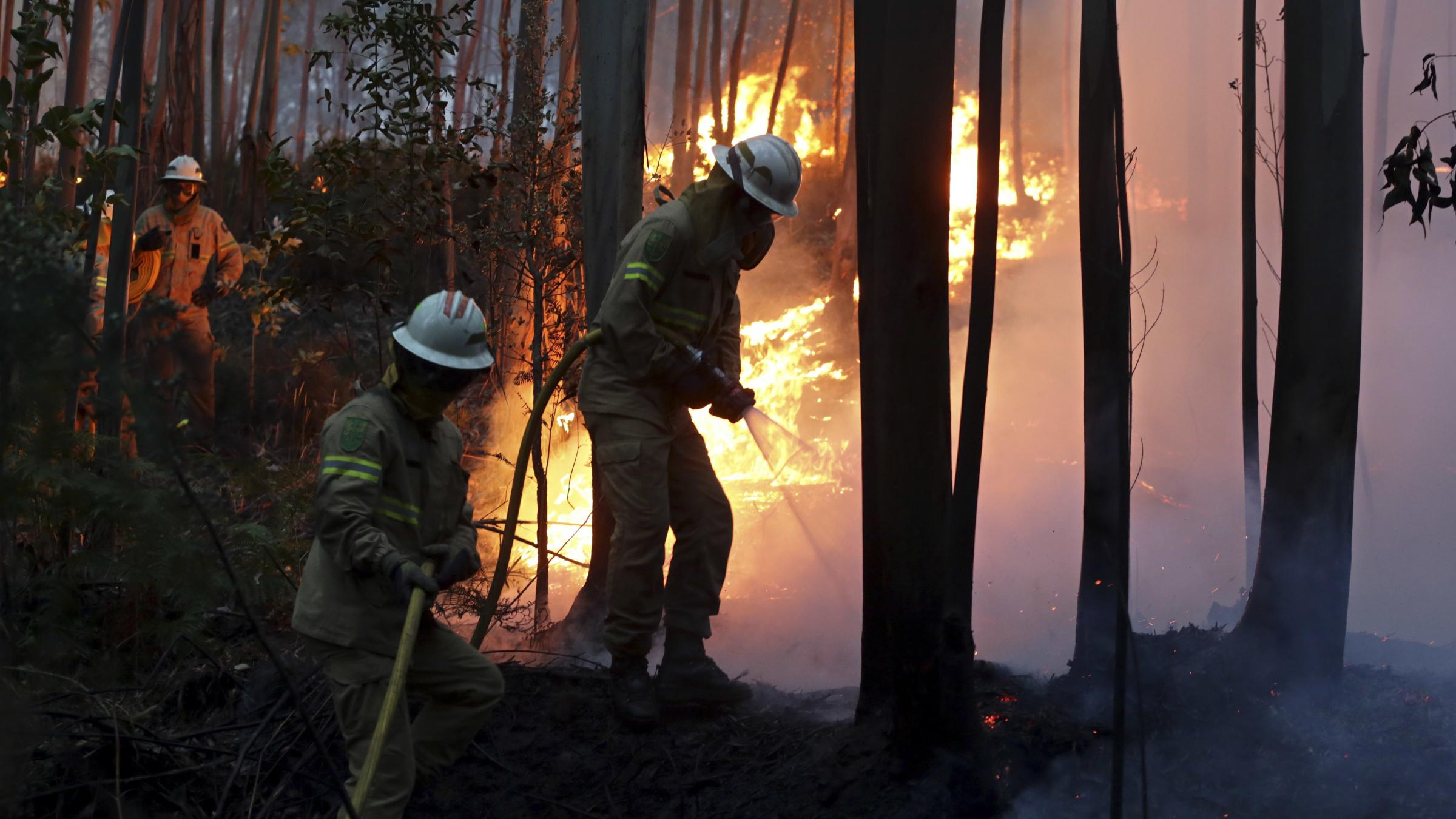 Forest fire kills 61 in Portugal; search on for more bodies